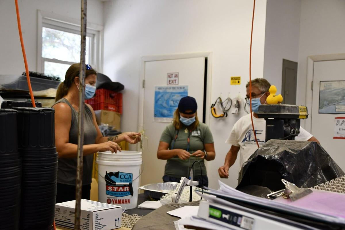(this one!) UCF Biology Professor and her CEELAB team bring national attention to climate change along Florida's coastline