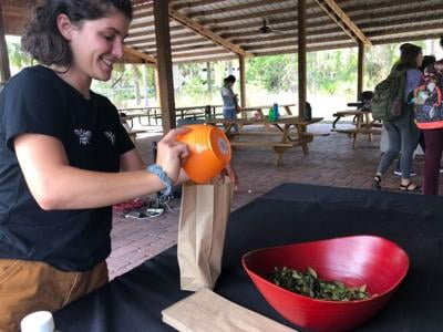 Students learn about the benefits and history of Yaupon Tea