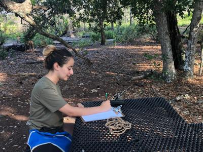 Monica Hanna sketching trees at the UCF Arboretum MA