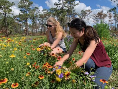 Plant Pressing Workshop teaches students how to preserve nature MA