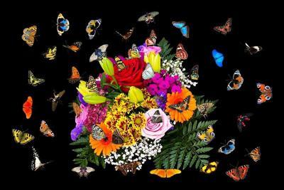 Colorful bouquet of butterflies