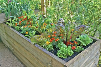 How to Choose Plants for Your Summer Garden