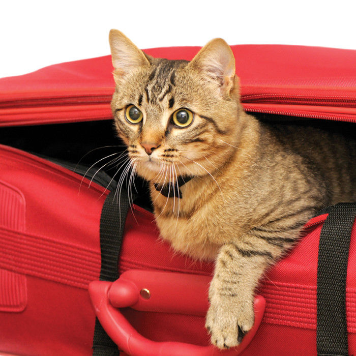 Eliminate Cat Travel Anxiety