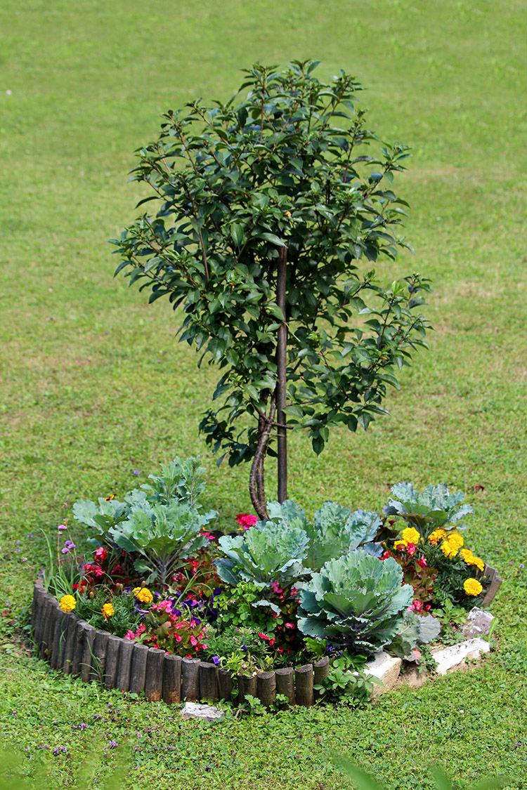 How to Choose and Care for Your Trees