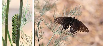 Pest Versus Pollinator: How Do You Decide?