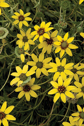 Favorite Fragrant Plants