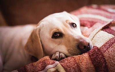 3 Signs of Discomfort to Watch for in Your Dog