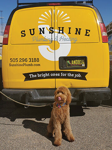 Sunshine Helps You Keep Cool in the Dog Days