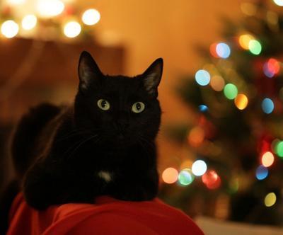 Ensuring a pet-safe holiday home