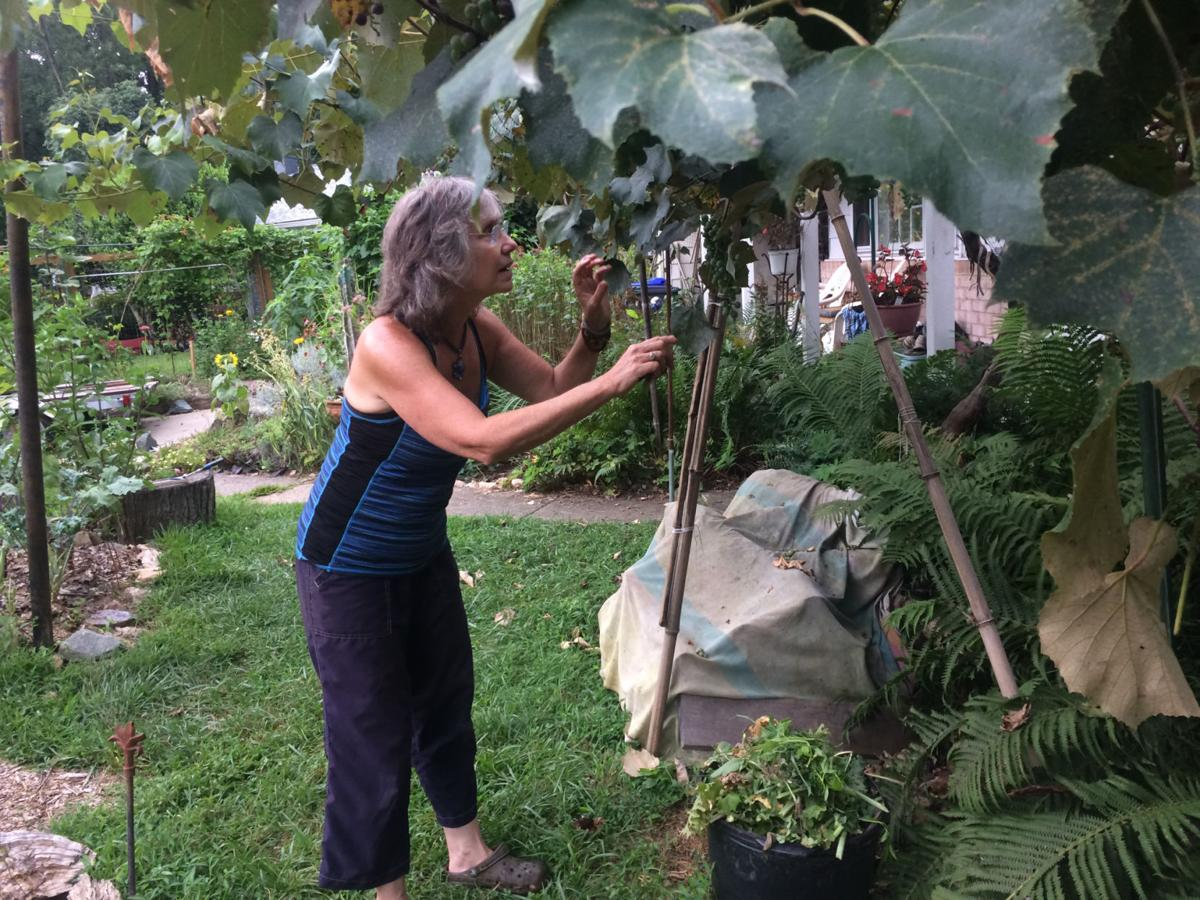 The front-yard vegetable garden: Can suburbia dig it?