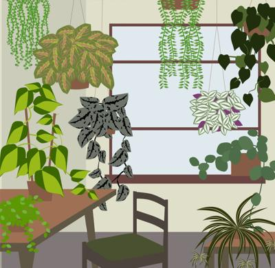 The 10 best hanging plants for creating an indoor jungle