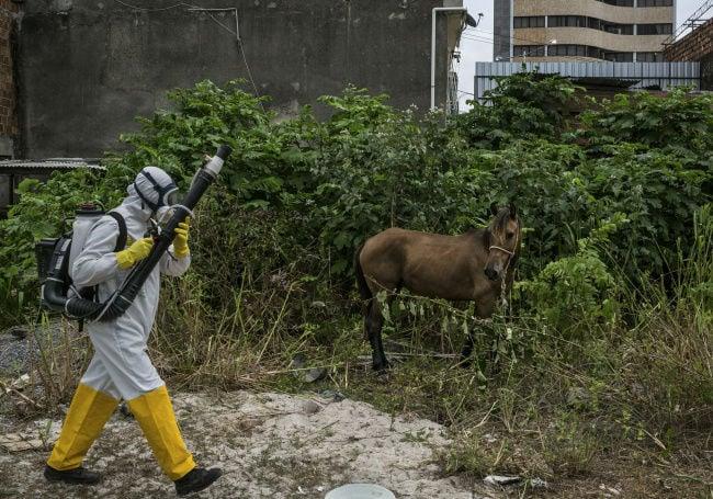 Zika virus still spreading
