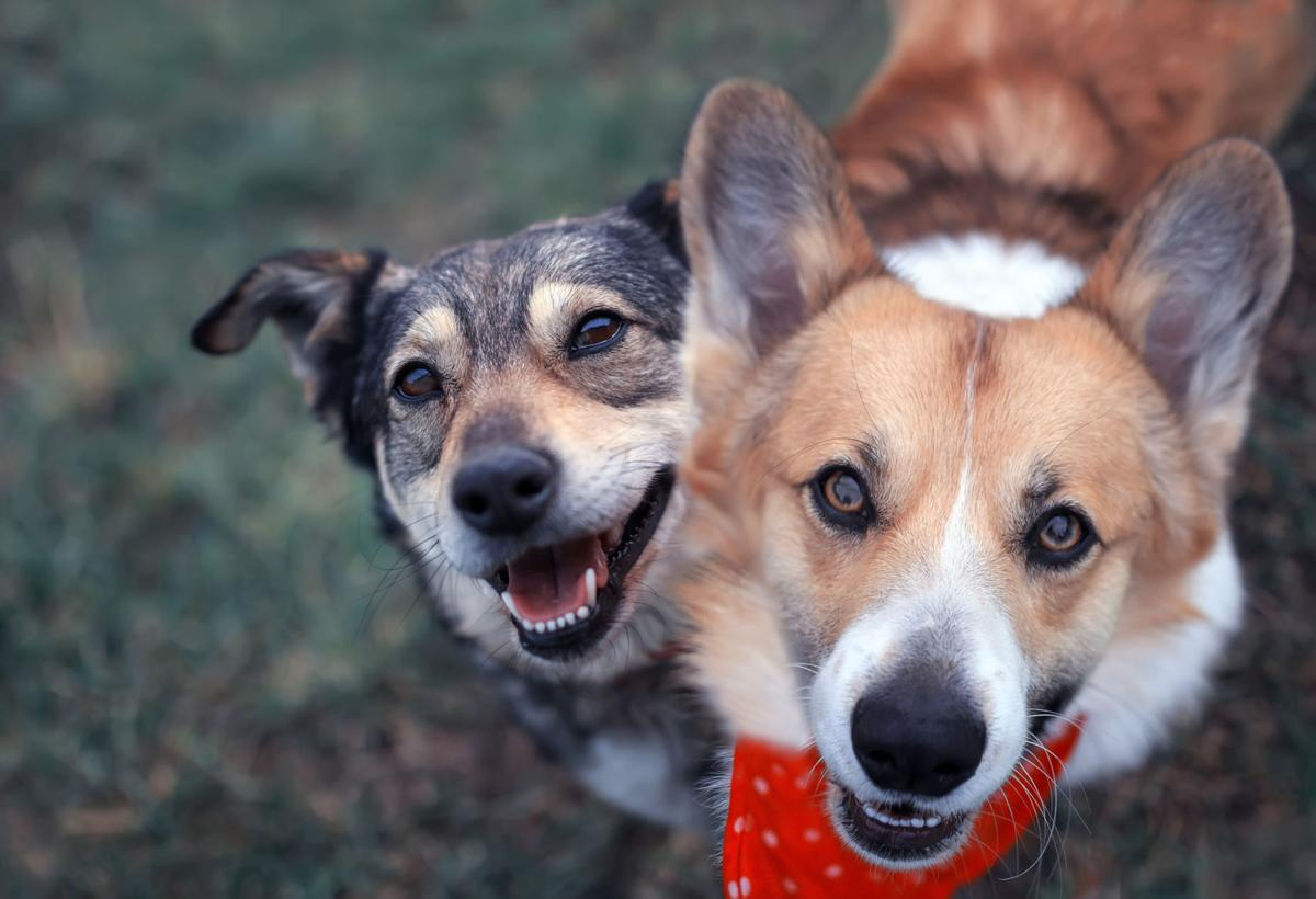Vets: Don't be too worried about pet getting coronavirus