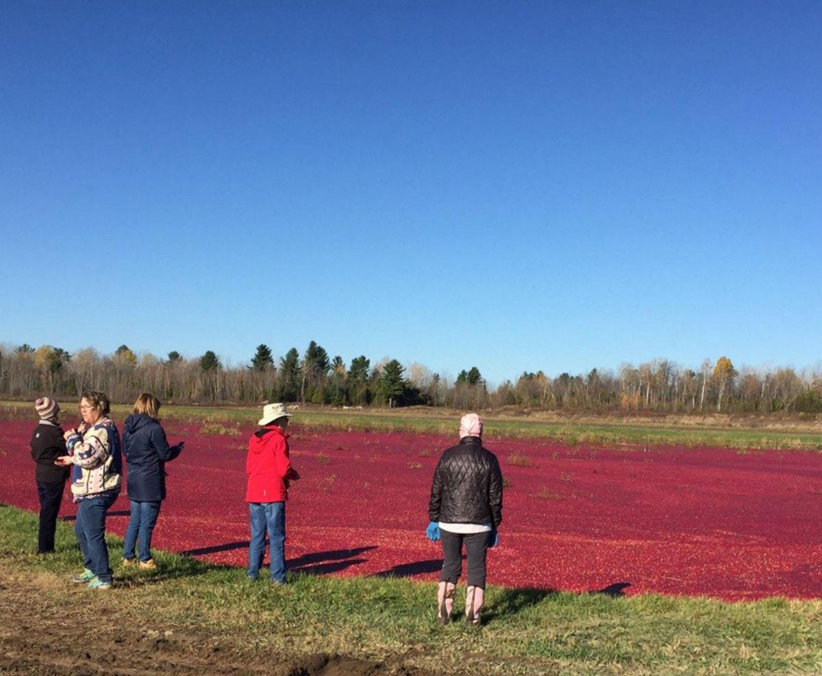 St. Lawrence Harvest Tour showcases local agriculture