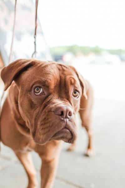 Tips to avoid pet theft