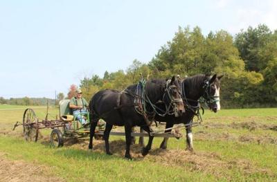 Plow Days will feature real horse power this weekend