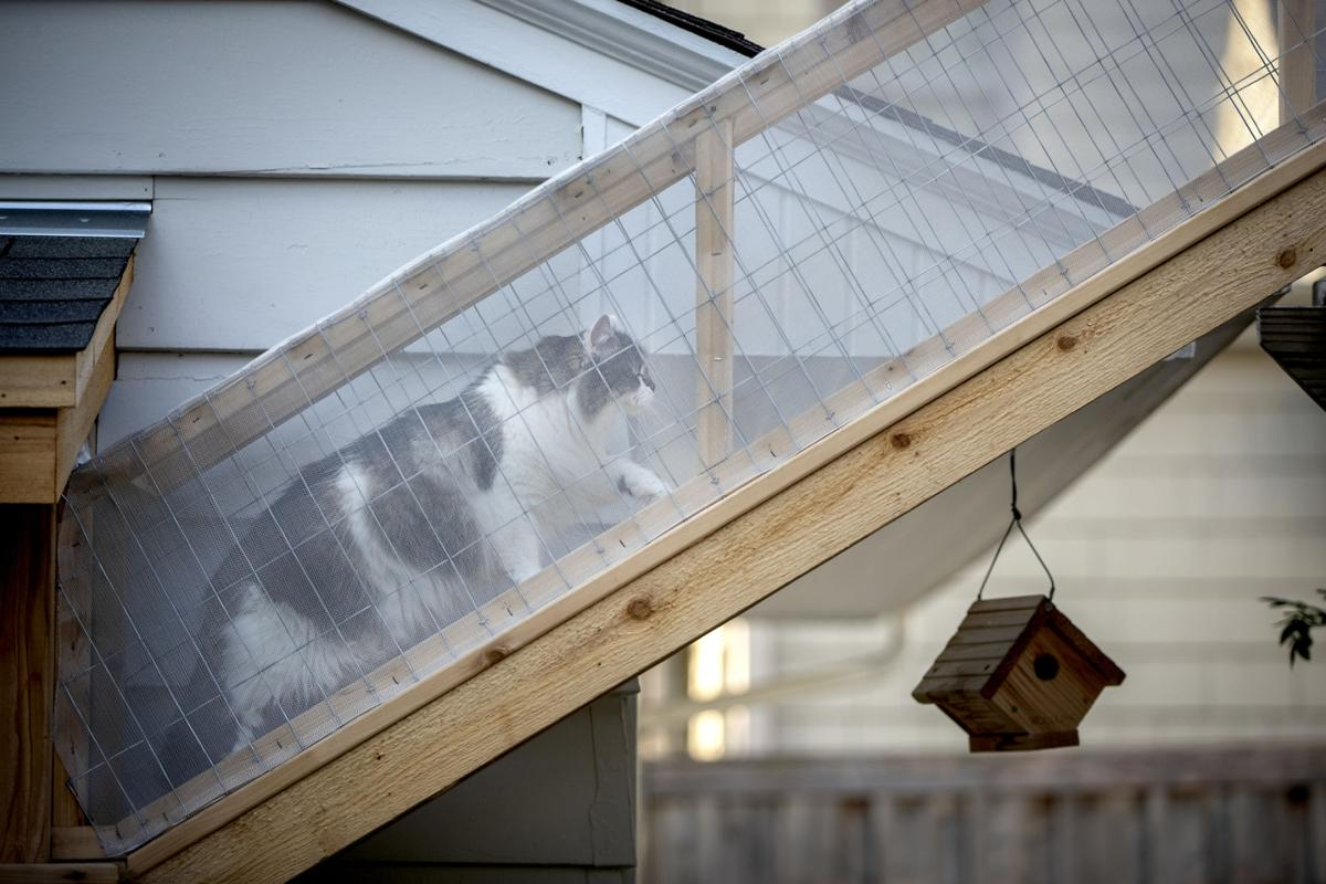 'CATIOS' fit for frisky felines Cat lovers build safe enclosure so pets can enjoy the outdoors safely