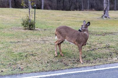 Legal age lowered for deer hunting