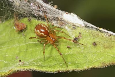 Aggressive spiders more likely to survive hurricanes than docile counterparts