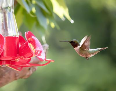 What's with little birds hogging my hummingbird feeders?