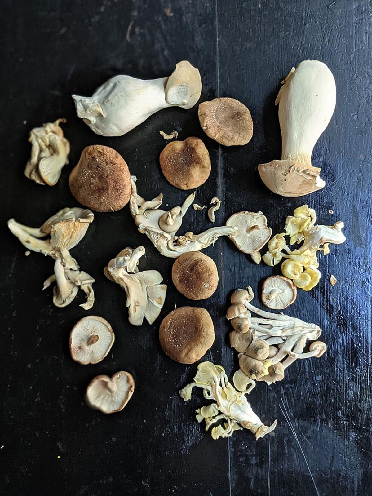 What fungi!