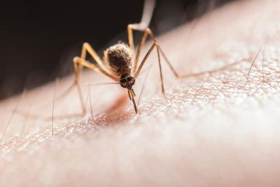 5 reasons a mosquito likes you more than others