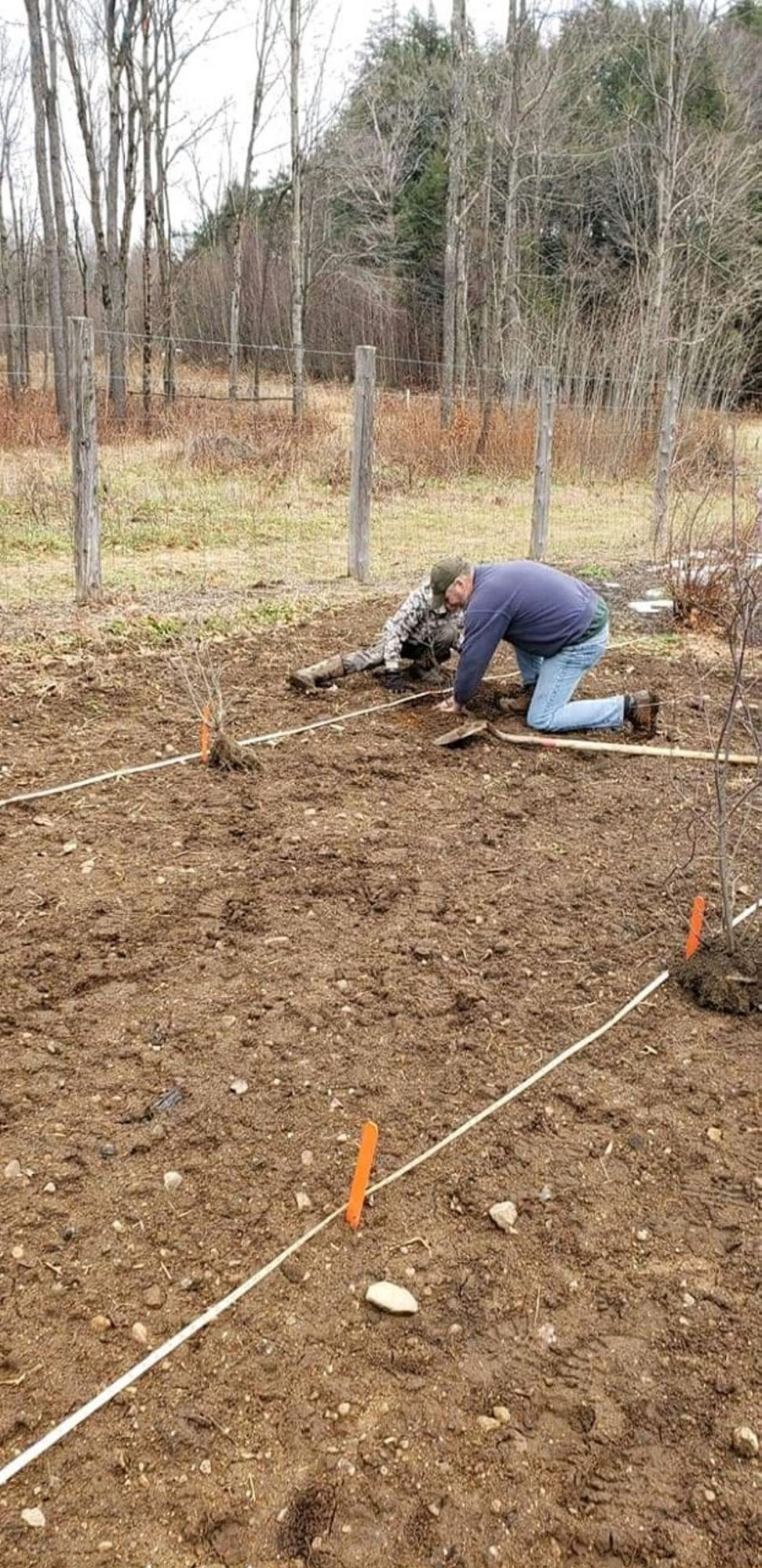 Harrisville farm participating in 'superfruit' research program