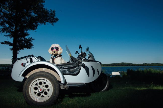 Sidecar dogs On the road with some easy, furry riders