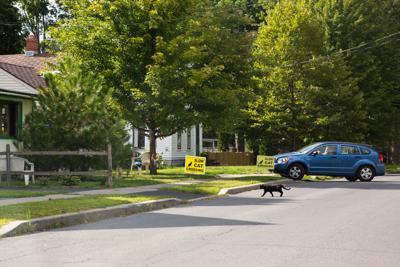 Caution: Cat crossing
