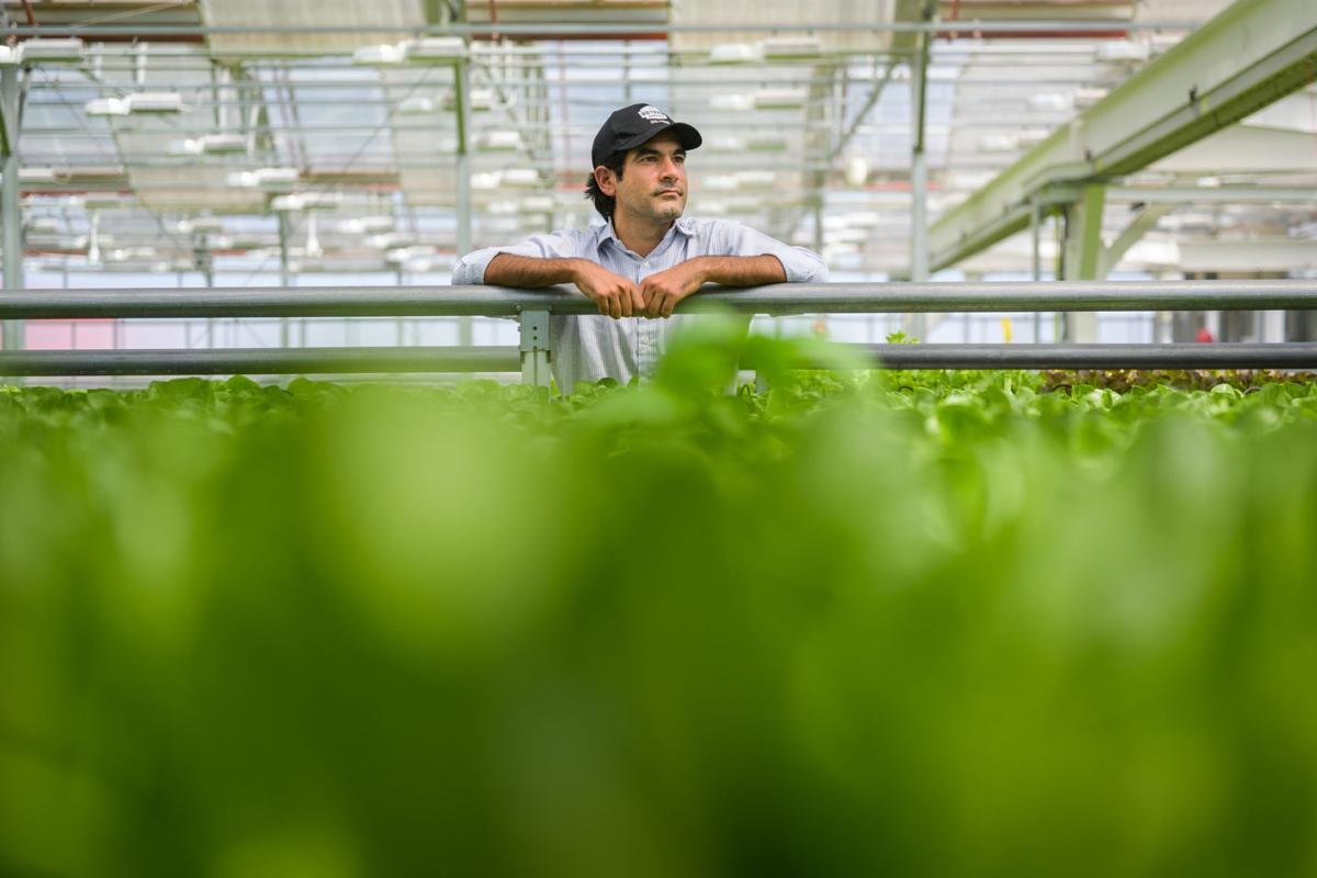 Indoor farming grows, but faces challenges