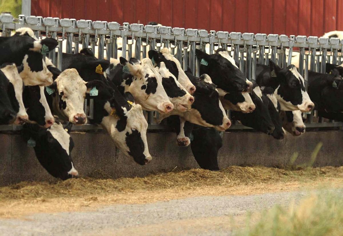 Gillibrand seeks aid for N.Y. dairy farmers