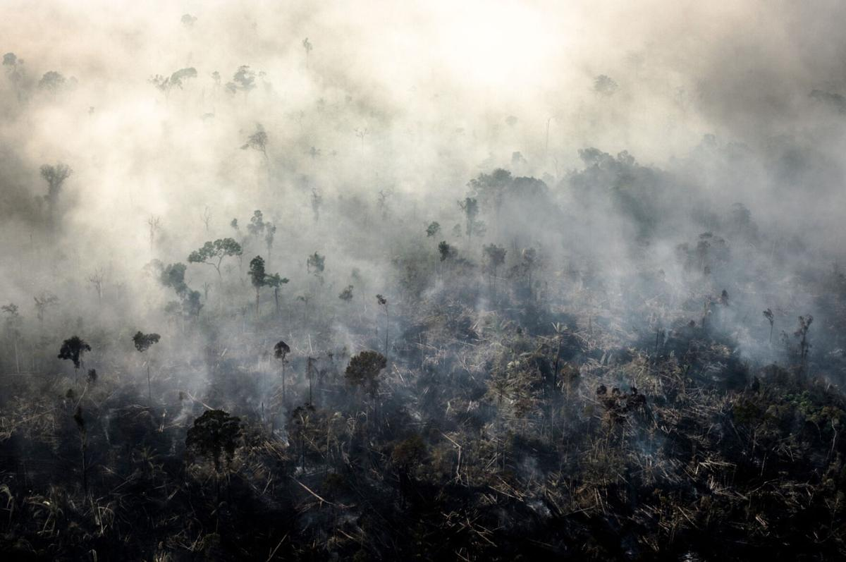 Brazil forest fires boost C02 emissions