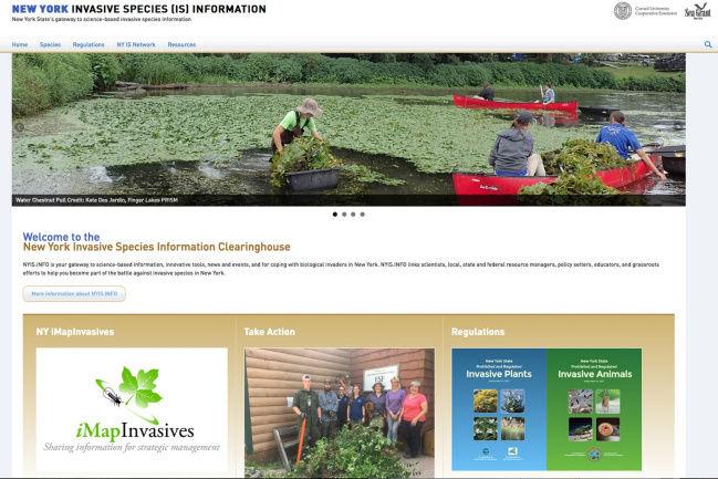 Invasive species website updated with more information