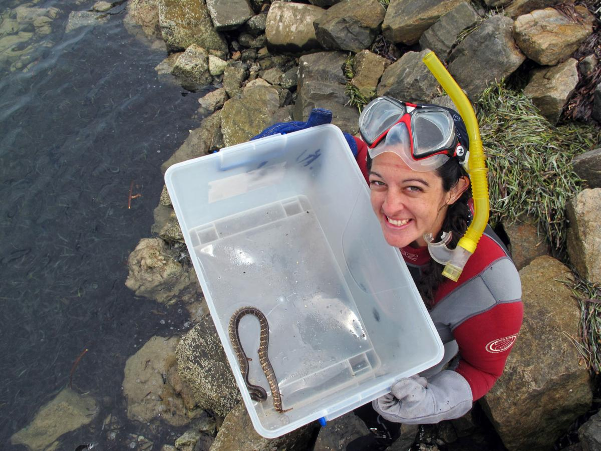 She studies sea snakes by the seafloor