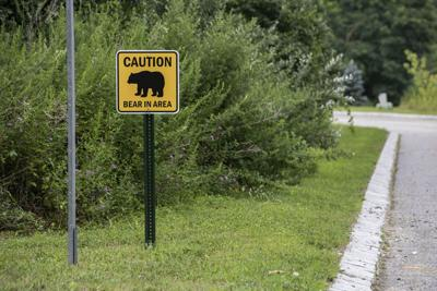Bear 'attack' or 'encounter'? Latest incident fires up debate over NJ hunting