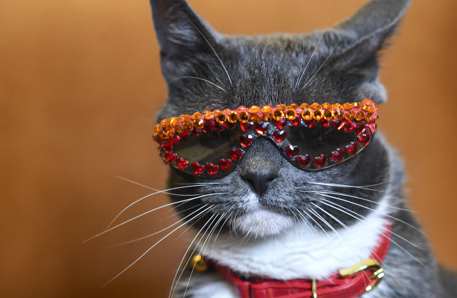 Meet Sunglass Cat This Instagram star has an eye-opening message of acceptance