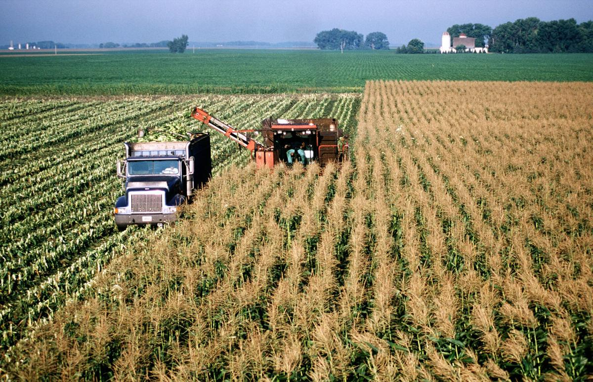Farmers largely voted for Trump, but hope Biden brings rational trade policy