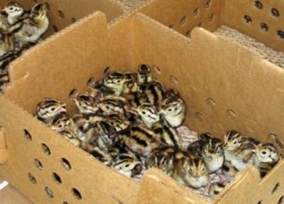 Pheasant hunt program applications due Sept. 1