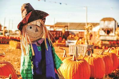 Scarecrow Contest at Family Fall Festival