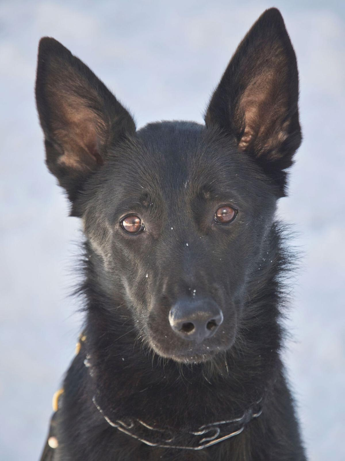 New K-9 on duty for sheriff's office