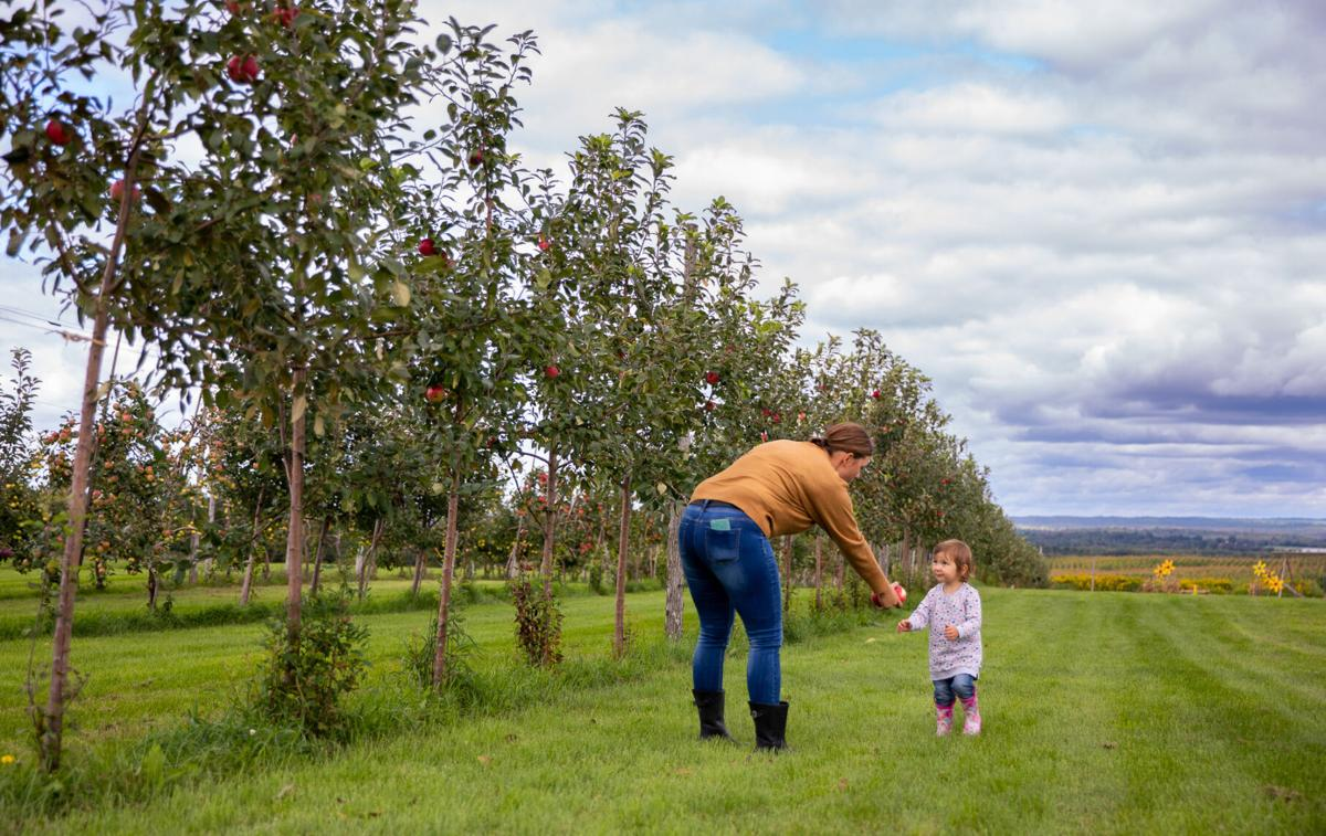 Many growers still seeing fruitful harvest
