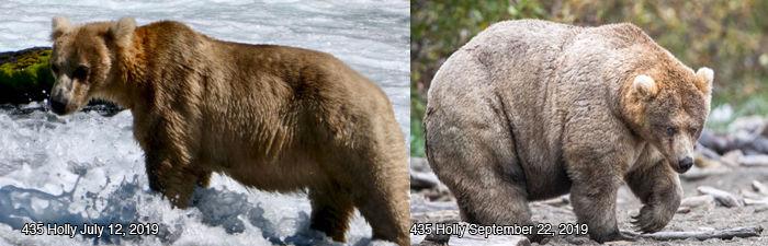 Help pick America's fattest bear