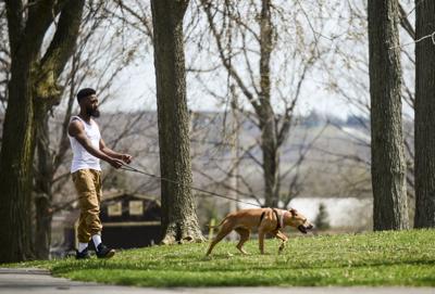 Volunteers finish Thompson Park trail, tree projects