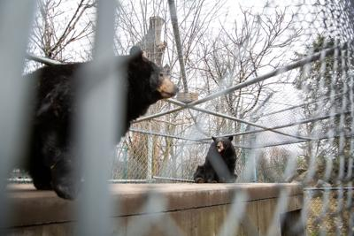 Public meeting Saturday about Zoo New York plans