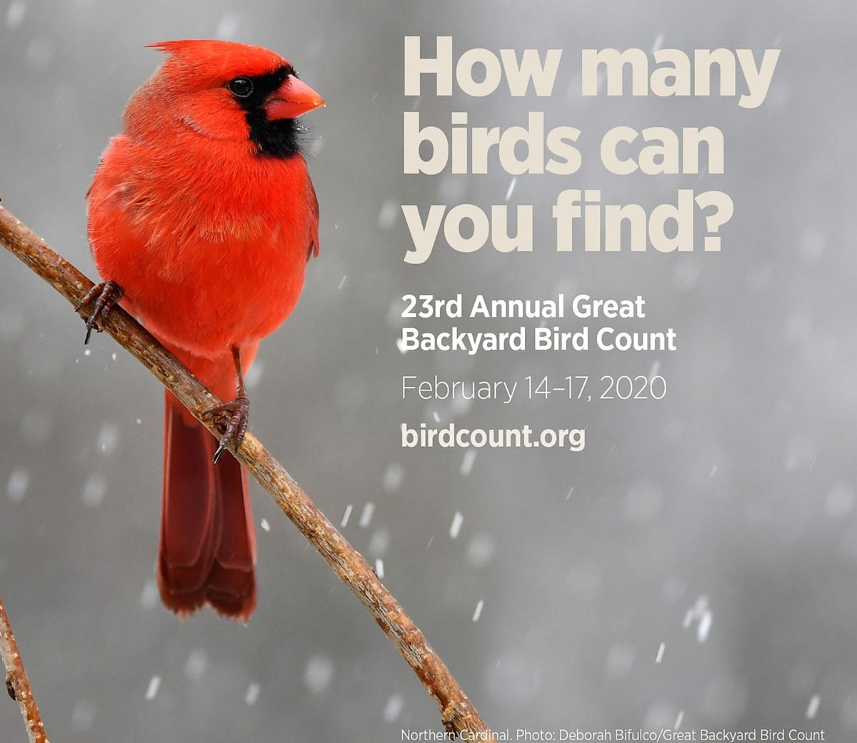 Backyard Bird Count needs volunteers