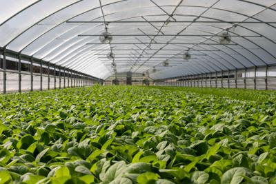 Hydroponic greenhouse plans remain afloat