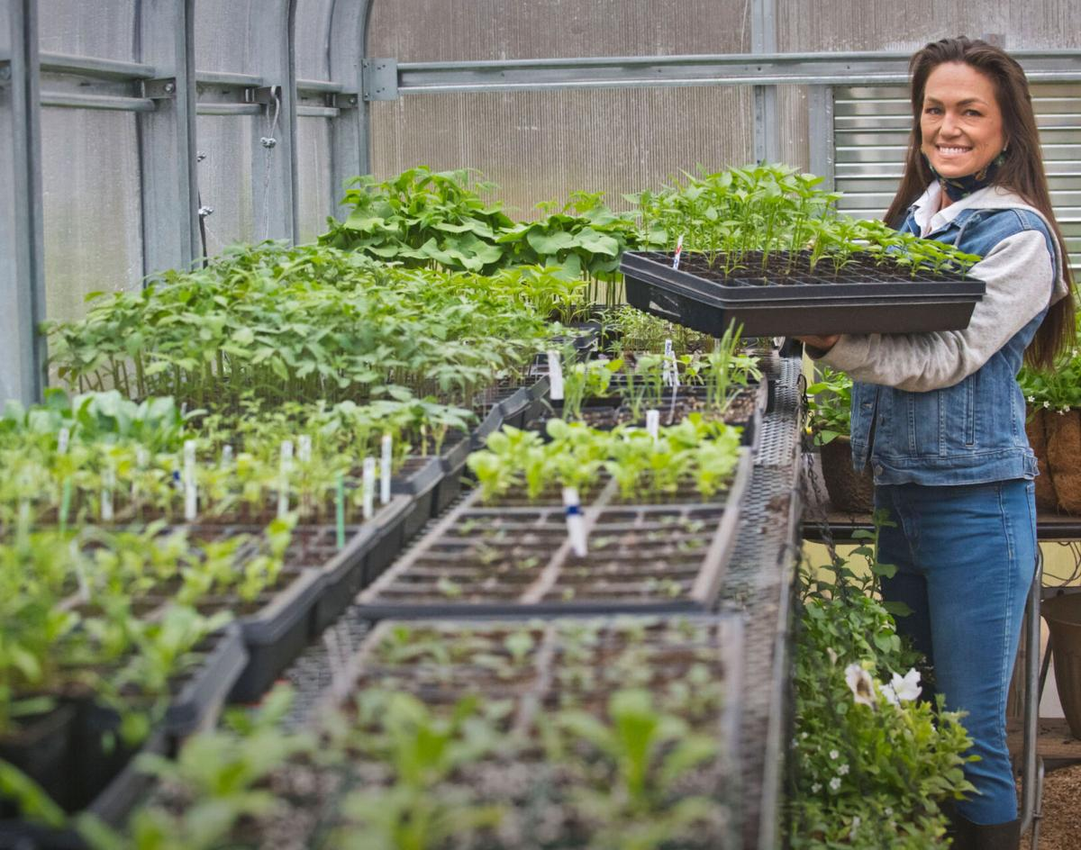 Flower farmers in Hermon getting in the 'grewve' for second season