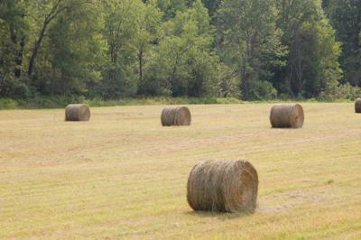 Lewis County to update ag plan
