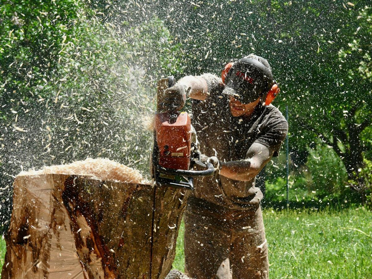 Prof. William Casey chainsawed back to life at Mexico Point Park