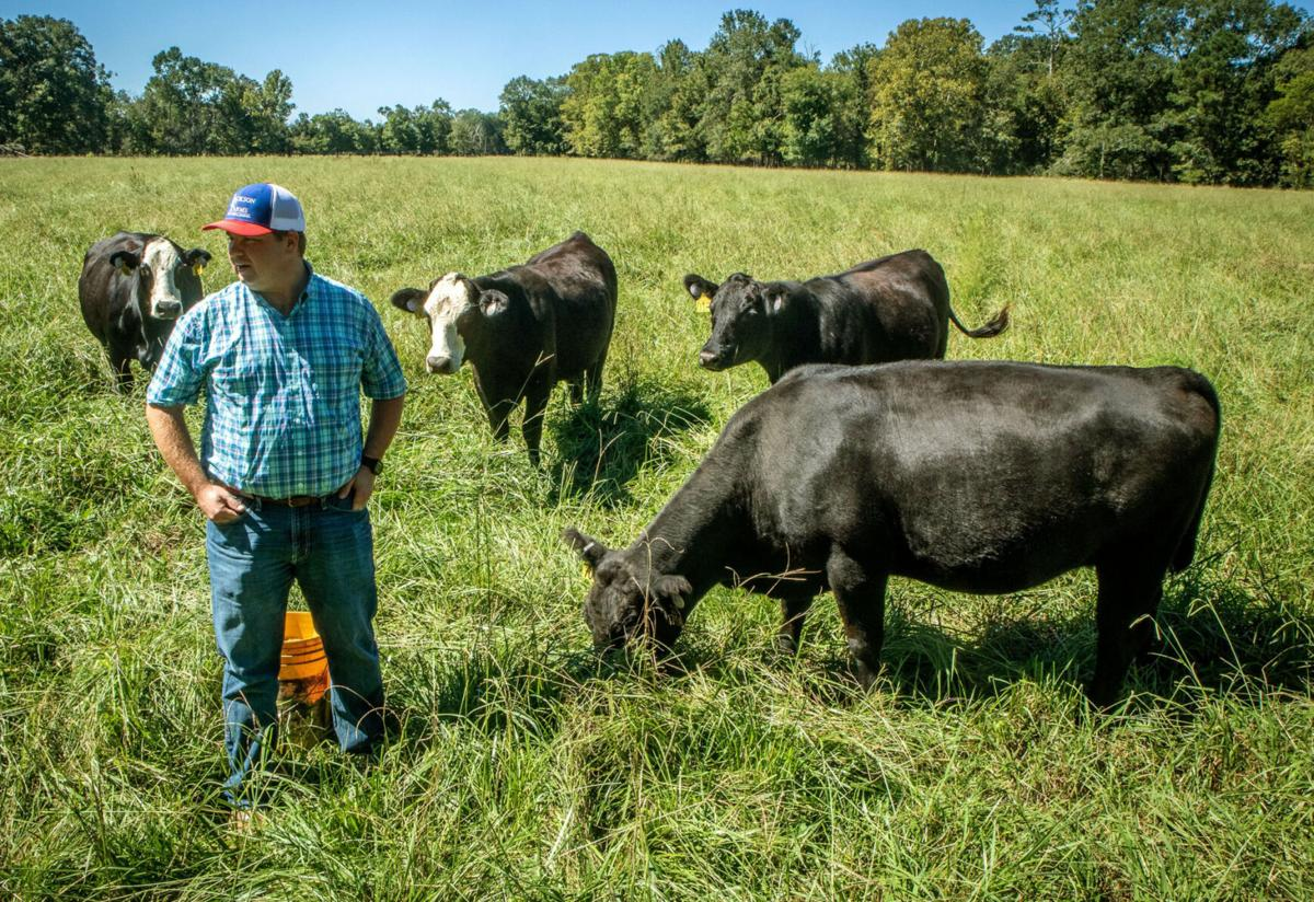 Consumers see red, meatpackers see green as price of beef surges